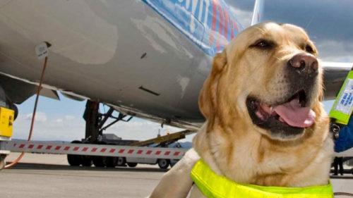 cane da assistenza davanti un aereo